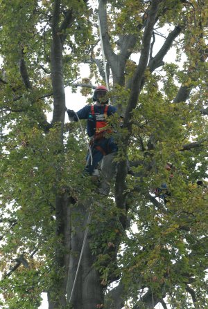 boomverzorging-onderhoud-hovenier-2