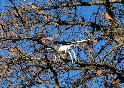 haal-je-drone-uit-een-boom